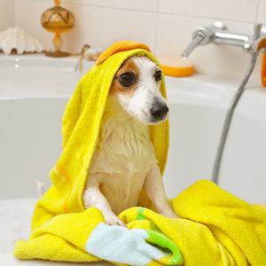 pet-friendly-features-for-your-new-home-dog-taking-bath-image.png