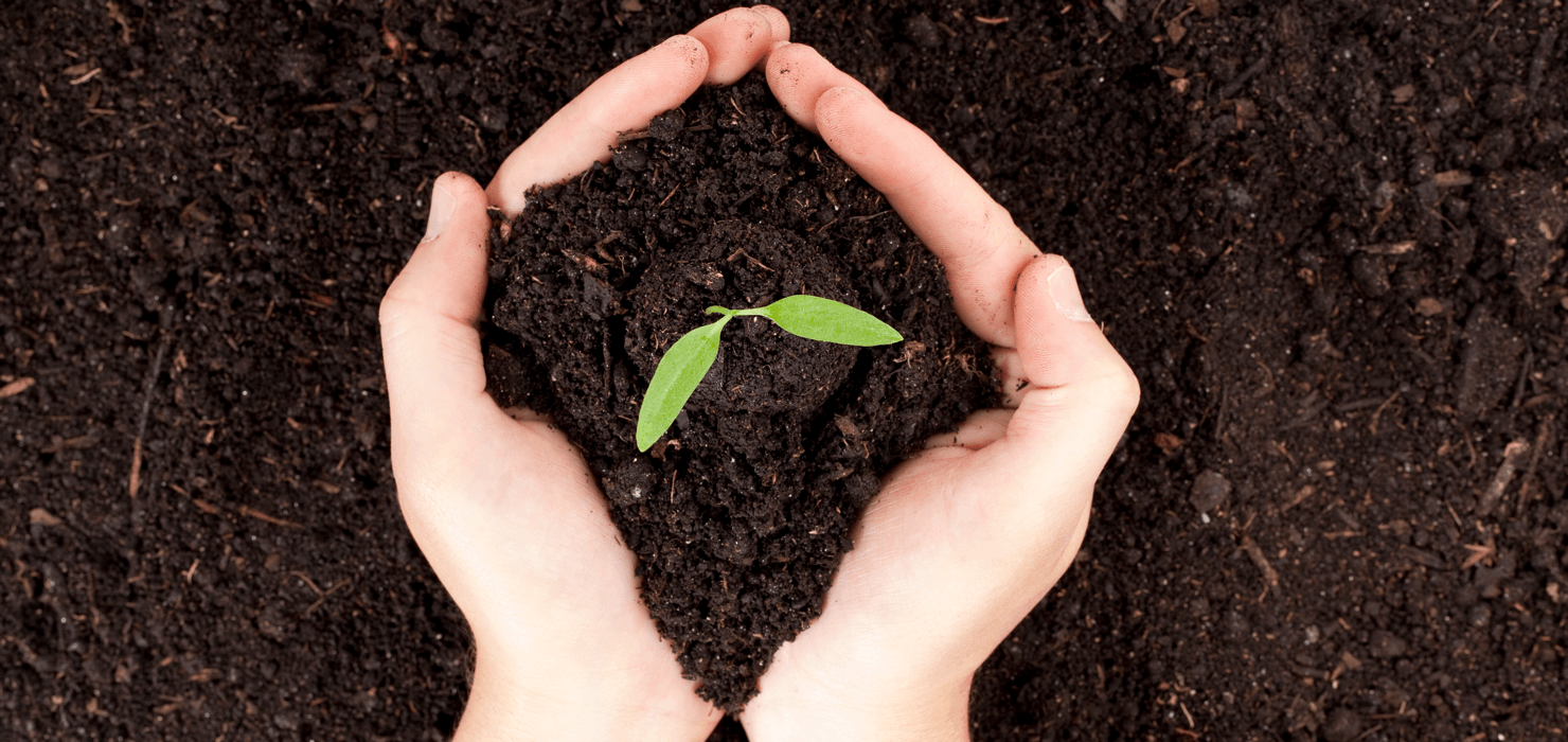 Ins and Outs of Composting Soil Featured Image