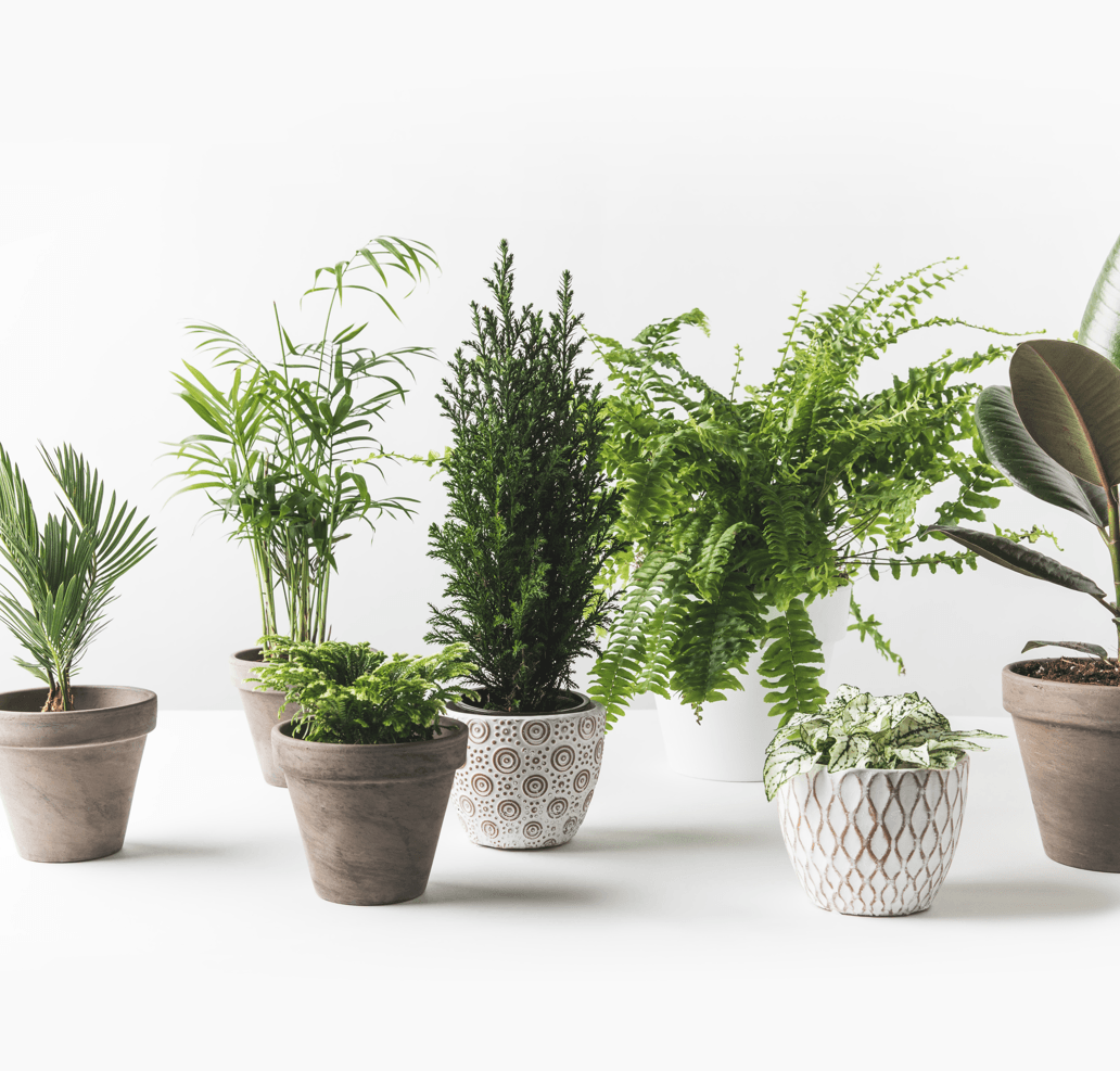 Plant Your Way to Cleaner Air in Your Home Plants Image