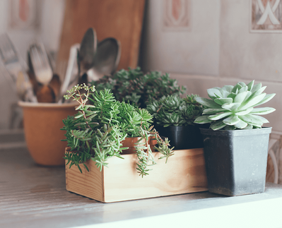 8 Spring Home Decor Trends for 2019 Plants Image