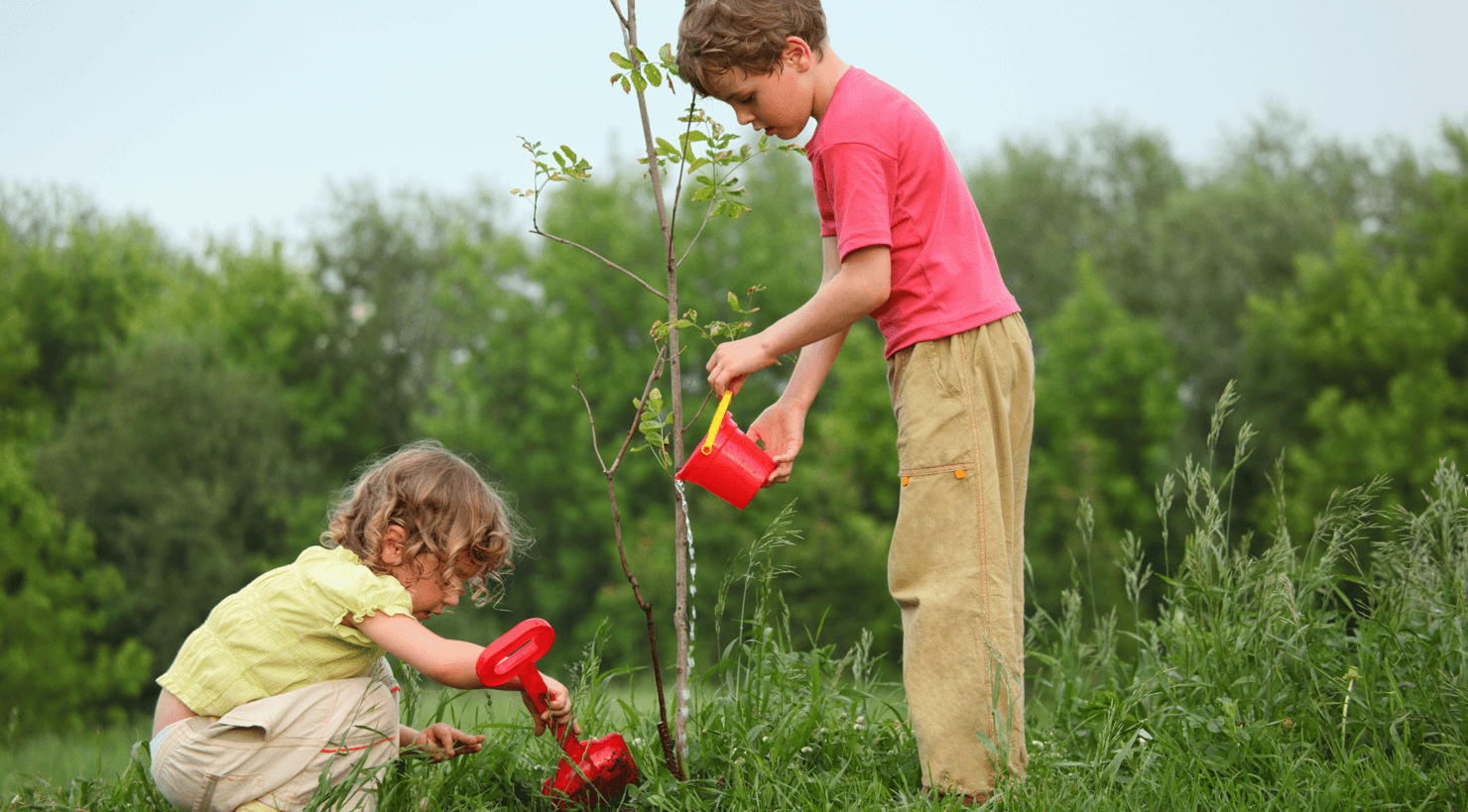 Picking and Planting Trees in Your Calgary Yard Featured Image
